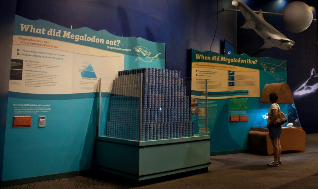 meg exhibit