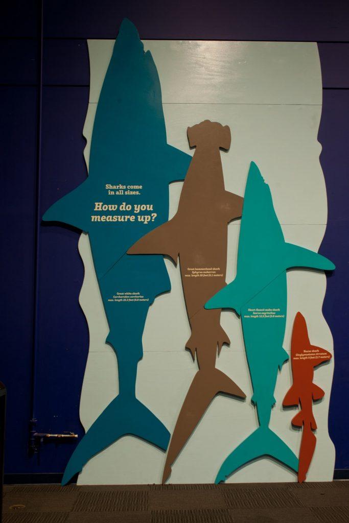 shark cut outs