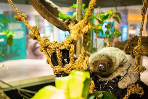 sloth in enclosure