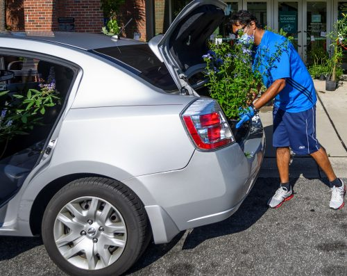 Man loading a plant into car