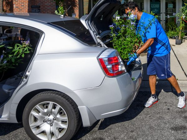 Man loading a plant into car