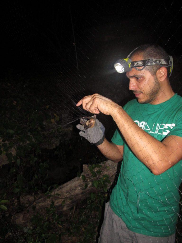 researcher holding a bat in a net