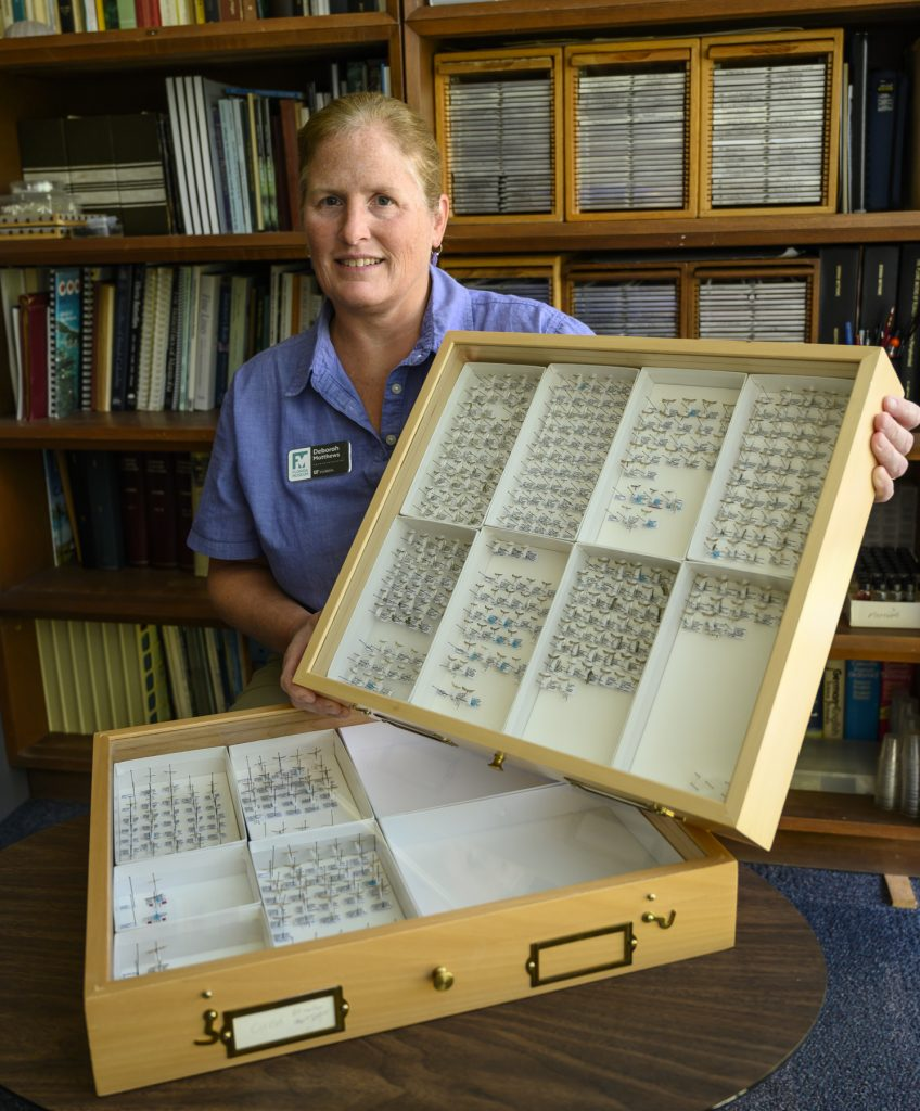researcher holding drawer of moth specimens