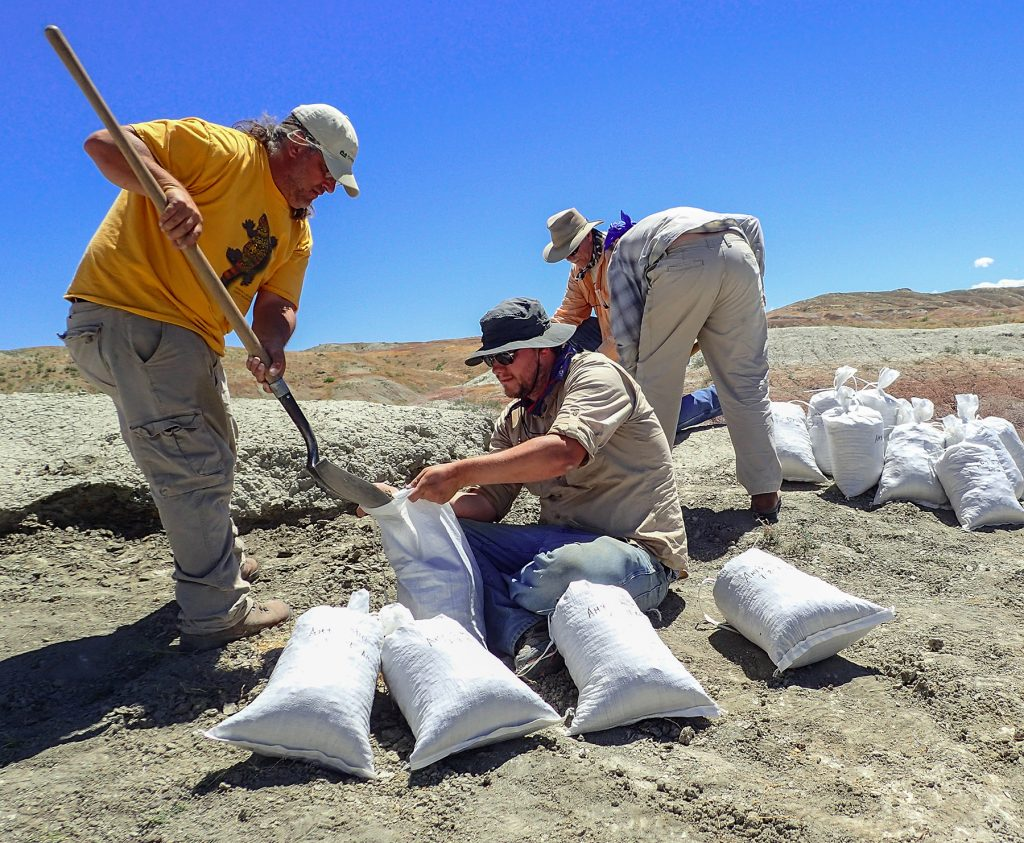 four men filling bags with dirt from a fossil site
