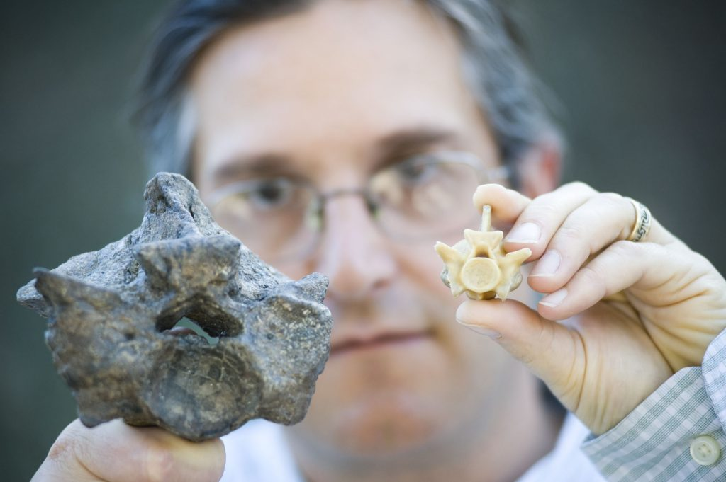 researcher holds up modern and fossil snake vertebrae to show size difference