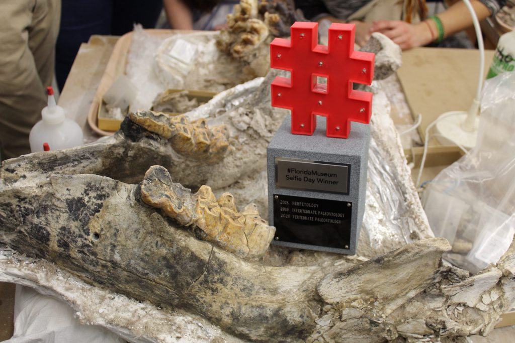 trophy sitting on a large fossil jaw