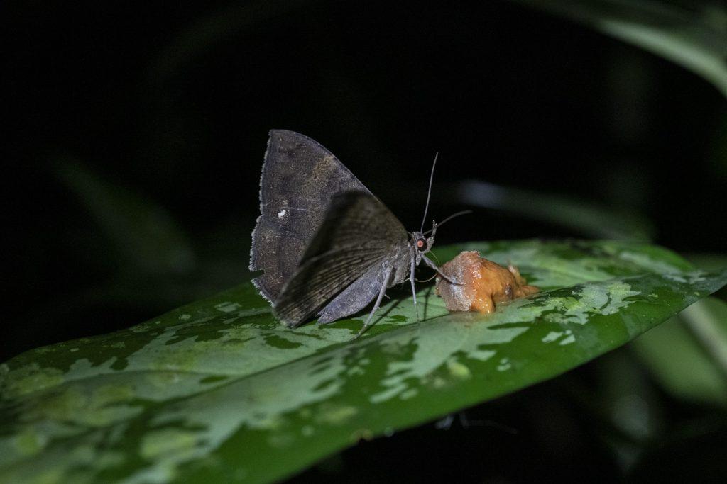 Moth on a leaf at night.