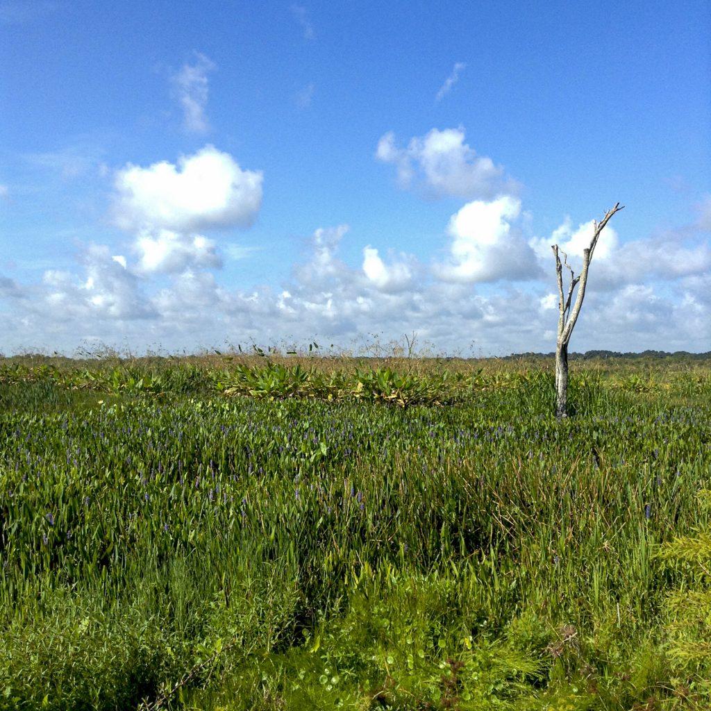 Landscape photo of Paynes Prairie
