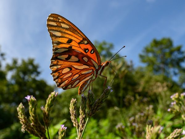 orange patterned butterfly against trees and sky