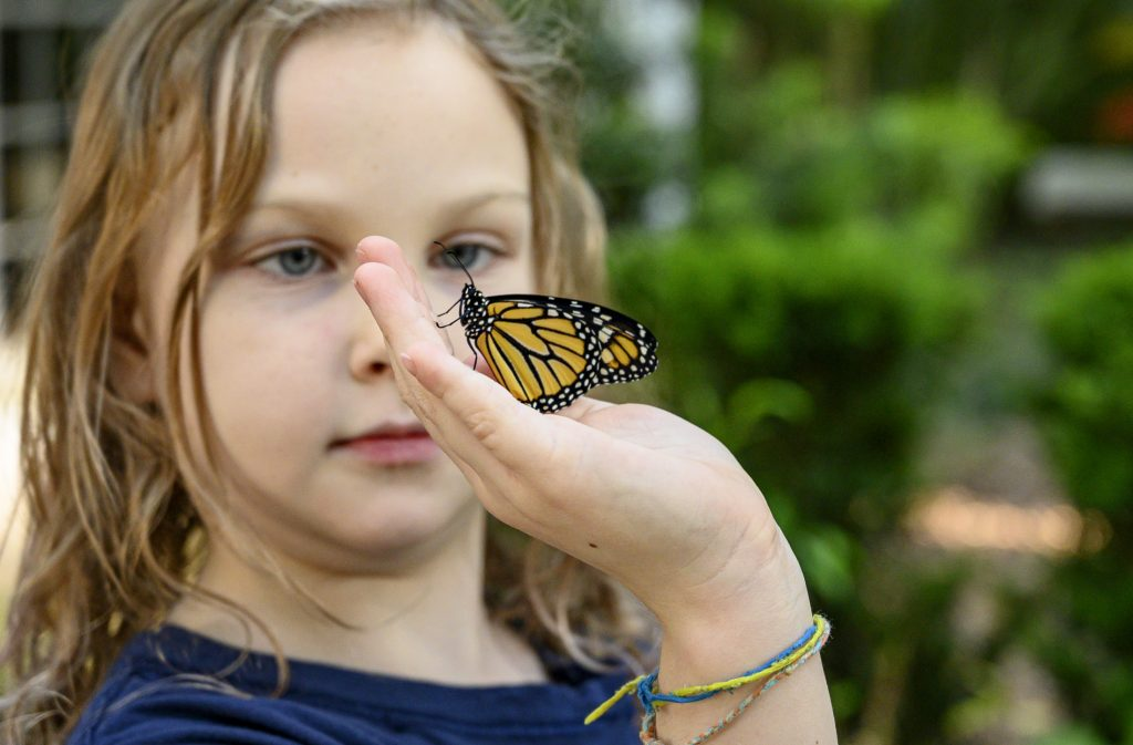 A child holding a monarch butterfly.