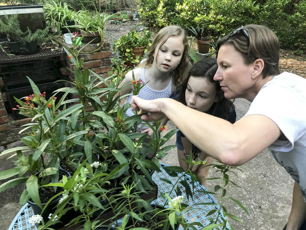 A woman and two children looking at caterpillars on milkweed plants.