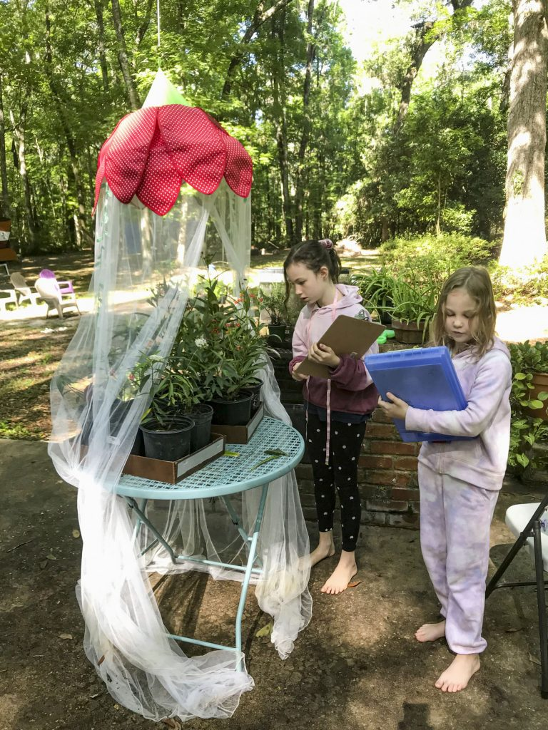 Two children with clipboards looking at milkweed plants with monarch caterpillars.