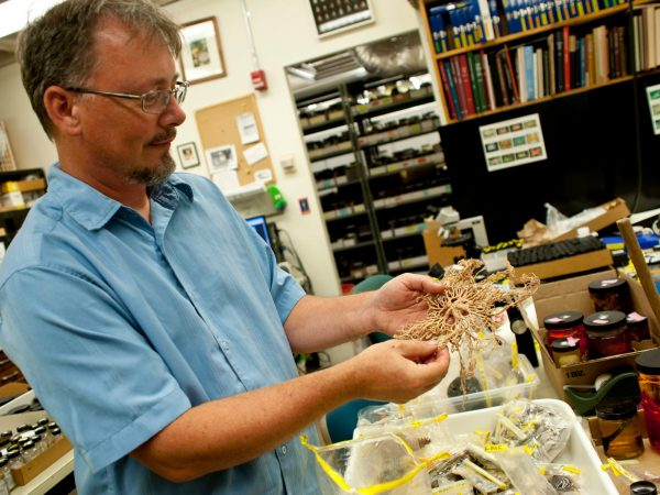 photo of collection manager John Slapcinsky holding an specimen from the museum