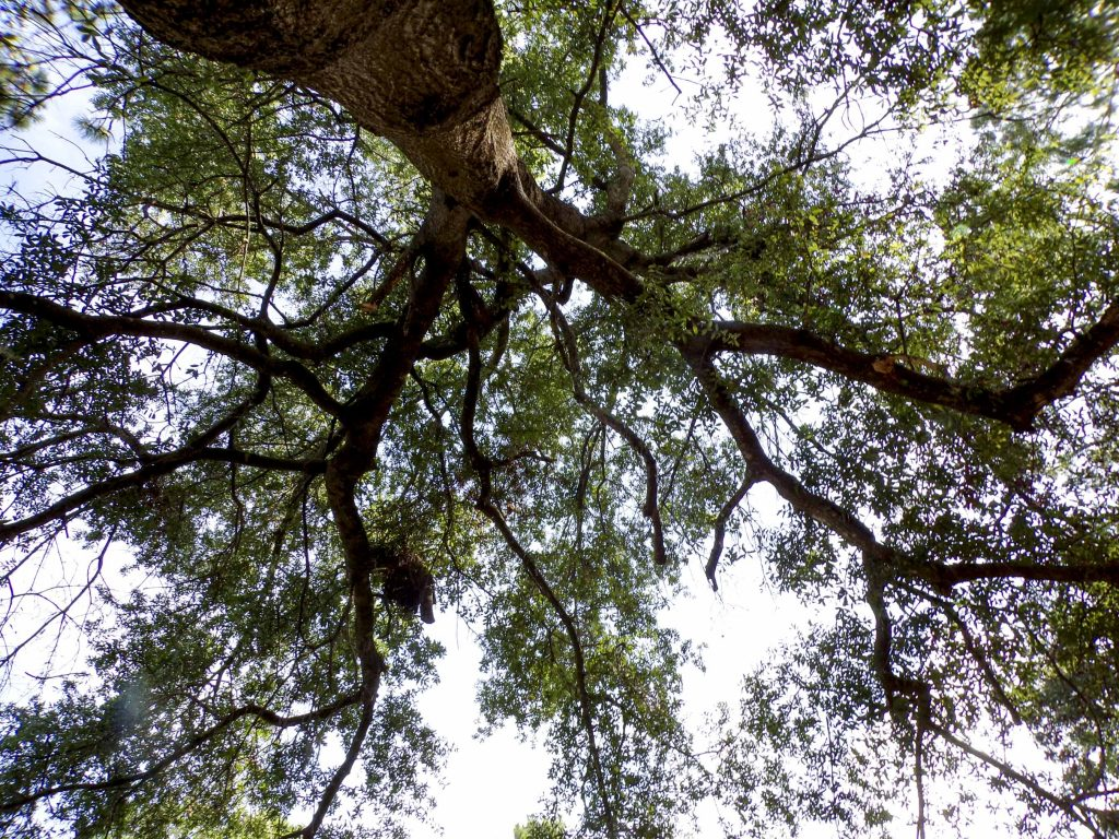 A photo of a tree looking up.