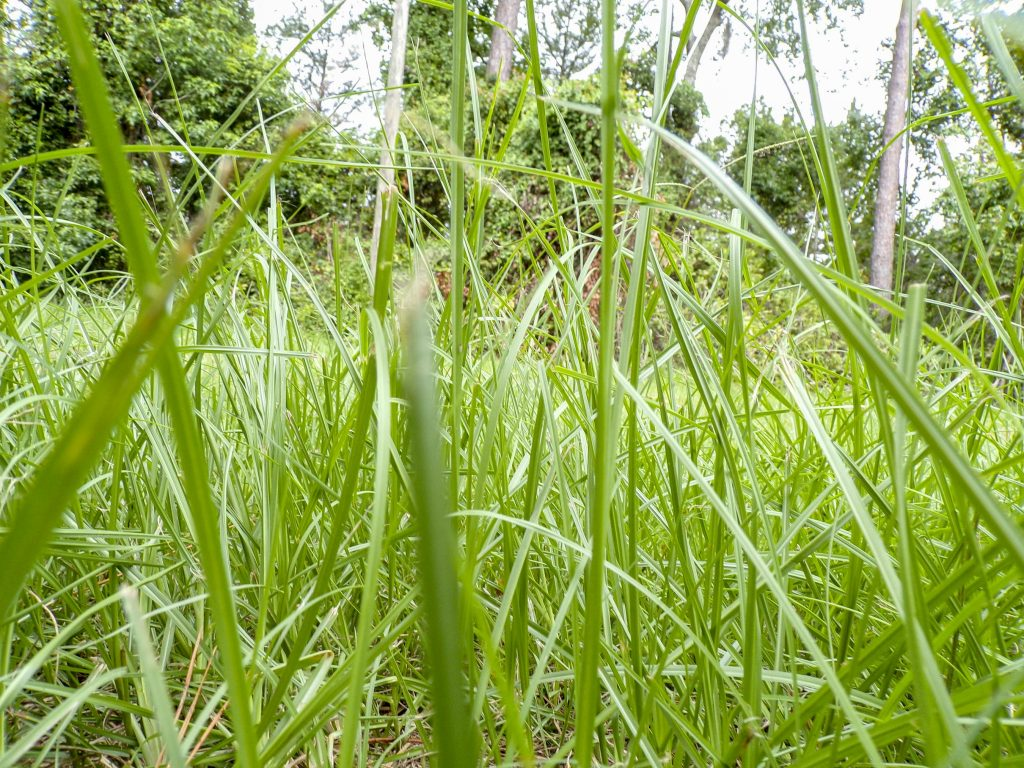 A photo of grass from the ground level.