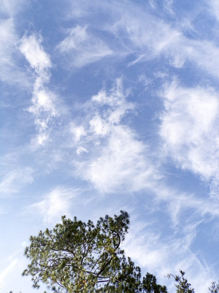 A photo of the top of a tree and the blue sky with clouds.