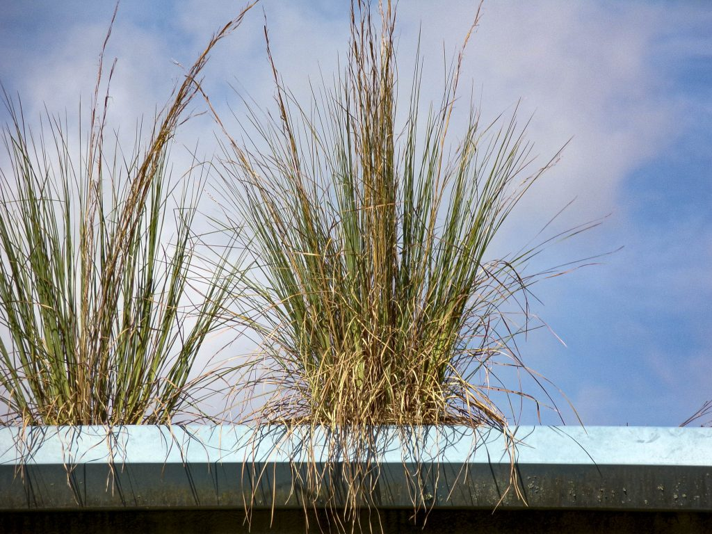 A photo of grasses against the sky.