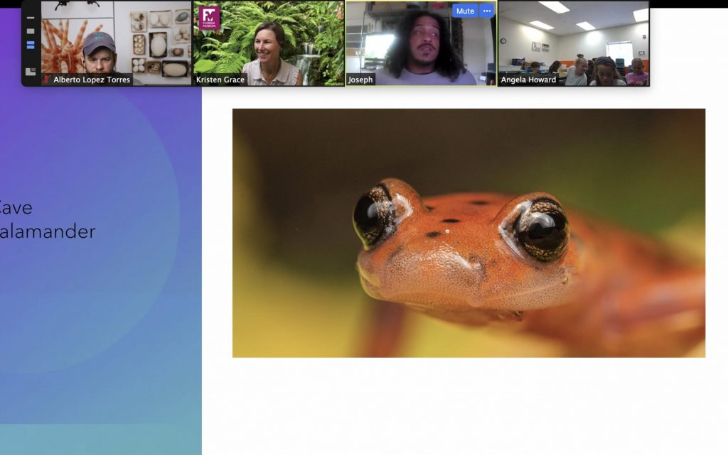 A screen shot of a salamander taken by Joseph Saunders during a Zoom session of photo camp.
