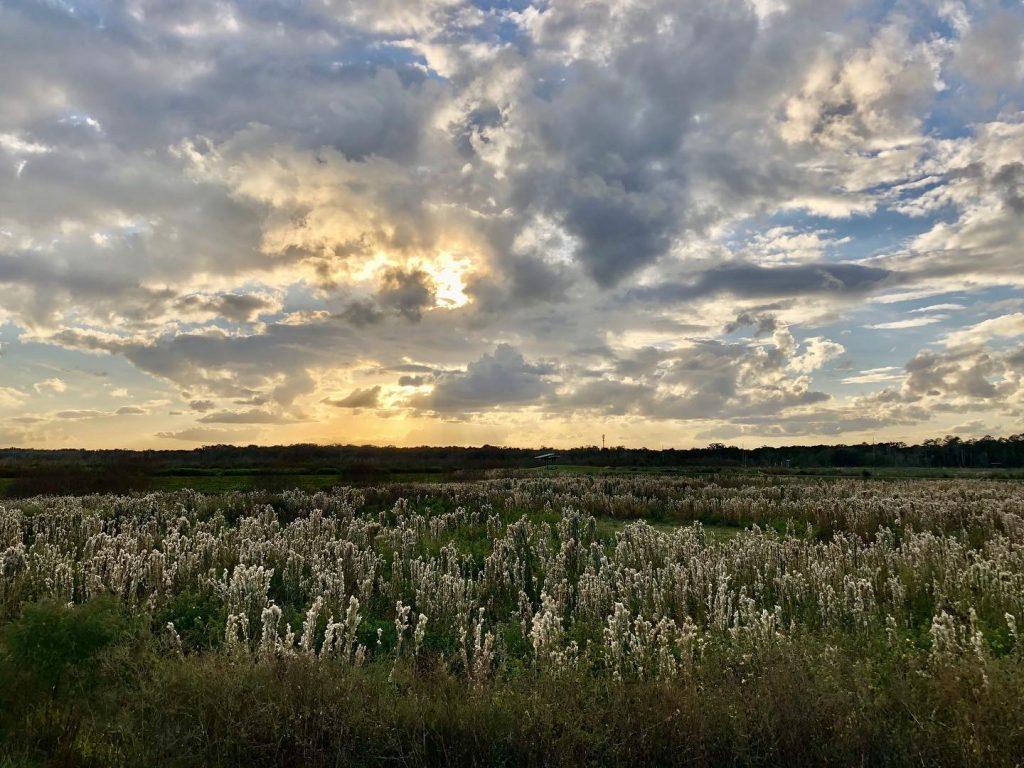 sunset over wispy plants