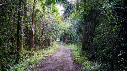 dirt road through bright green foilage