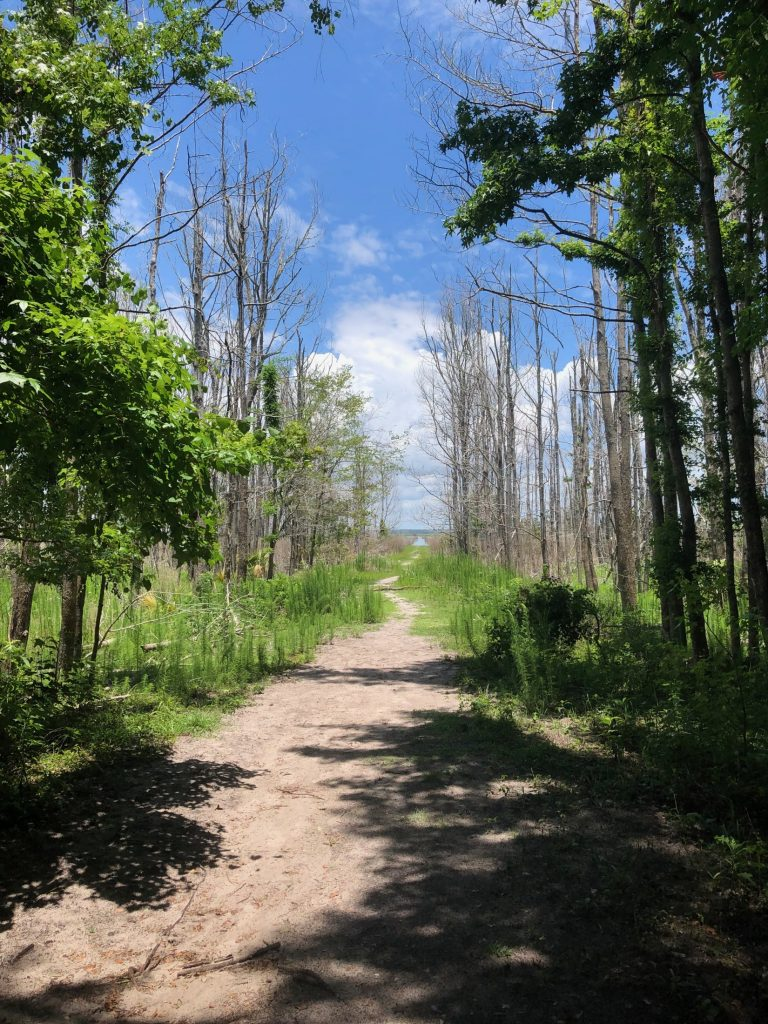 looking down path of nature trail