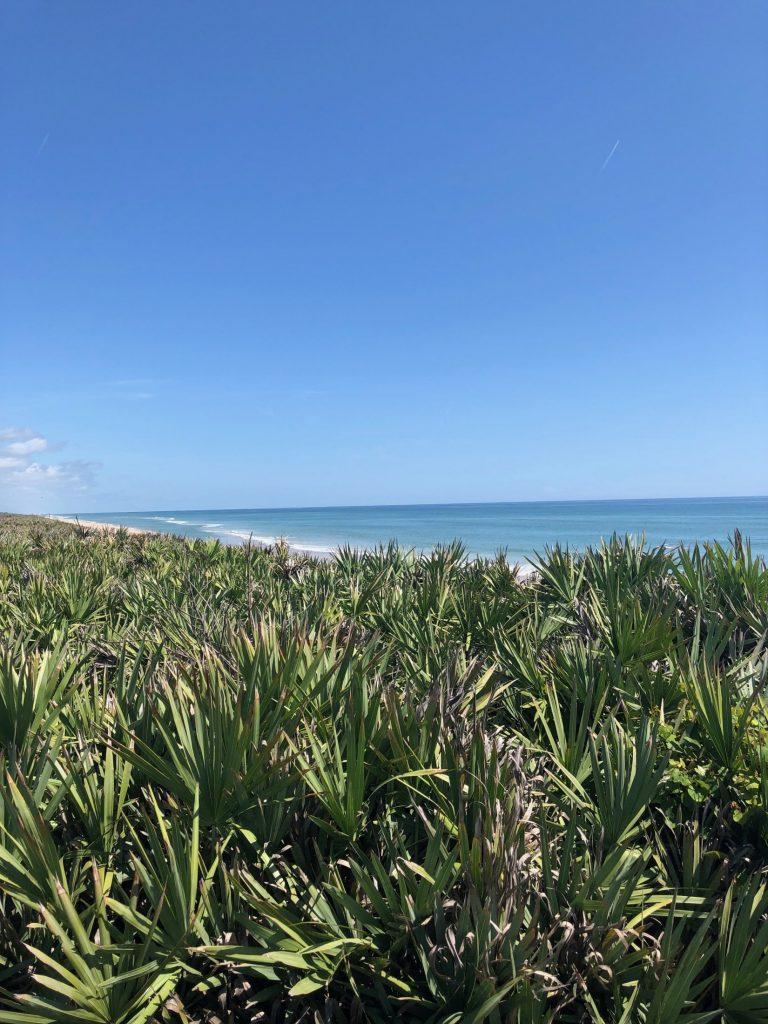beach and palmettos