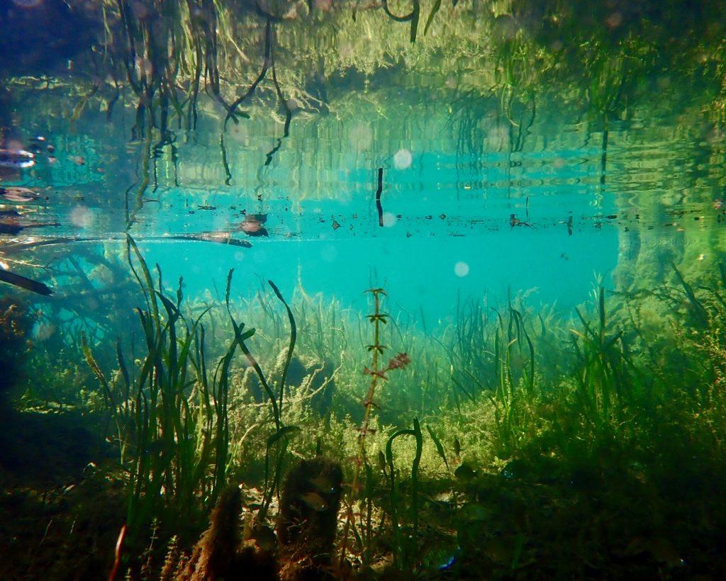 underwater view of spring