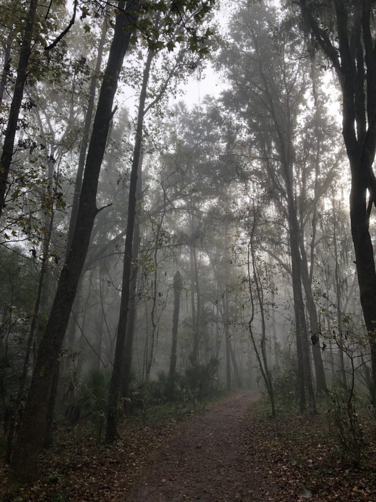foggy trail with trees