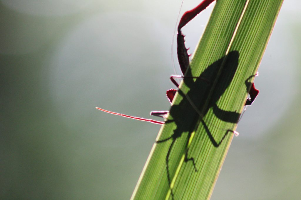 insect on leaf with shadows
