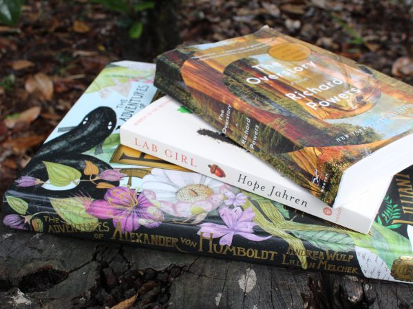 stack of books on tree stump