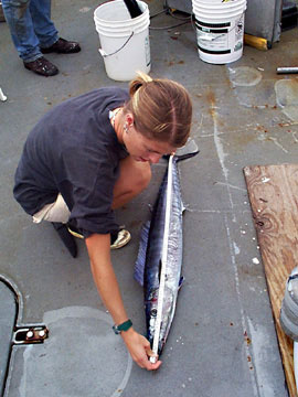 Measuring the length of a wahoo. Photo courtesy NOAA