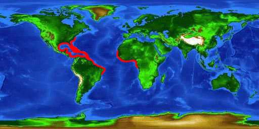 World distribution map for the scrawled cowfish