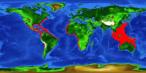 World distribution map for the scrawled filefish