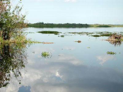 Everglades marsh habitat. Photo © Cathy Bester/FLMNH