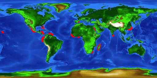 World distribution map for the bignose shark