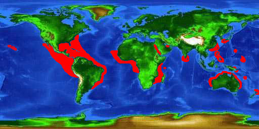 World distribution map for the silky shark