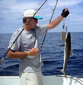 Angler lands a juvenile silky shark. Image © Emily Siegrist