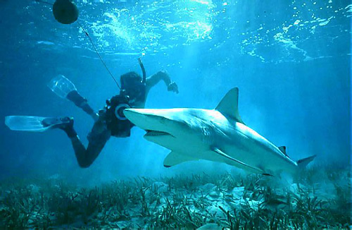 Underwater photographer with a blacktip shark. Photo © Jeremy Stafford-Deitsch