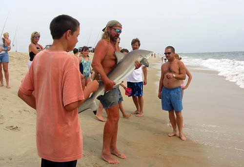 Blacktip shark caught off Delaware National Seashore, near the mouth of the Indian River Inlet (Delaware, U.S.) Image © Shannon Welford