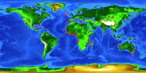 World distribution map for the gulper shark