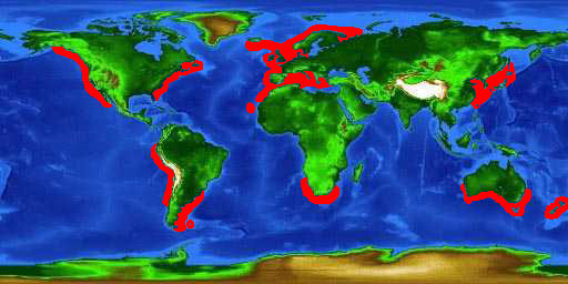 World distribution map for the basking shark