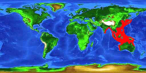 World distribution map for the brownbanded bamboo shark