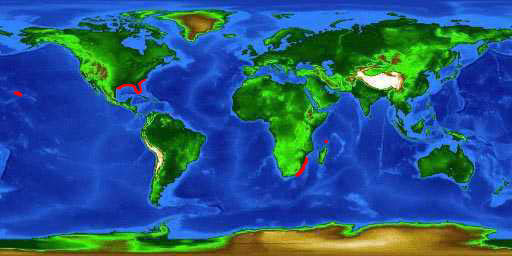 World distribution map for the roughskin dogfish