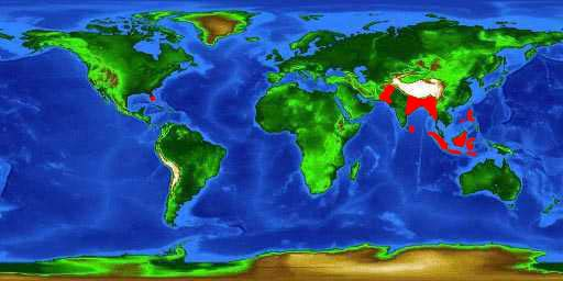 World distribution map for the walking catfish