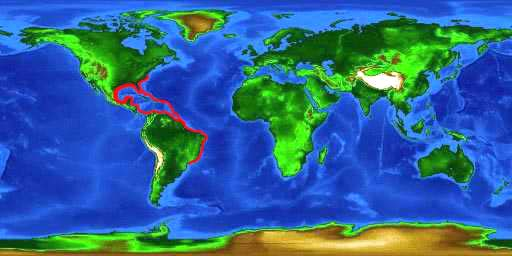 World distribution map for the sand perch