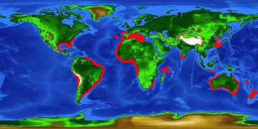 World distribution map for the sharpnose sevengill shark