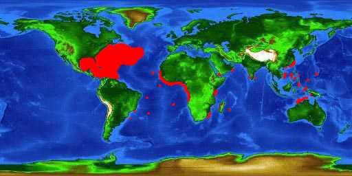 World distribution map for the sargassumfish