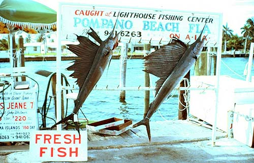 Sailfish. Photo courtesy NOAA