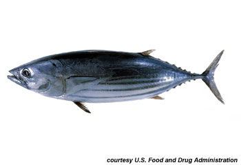 Skipjack Tuna. Photo courtesy U.S. Food and Drug Administration