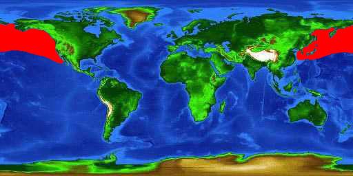 World distribution map for the salmon shark